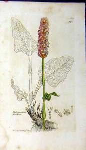 Biblioteca digital del Real Jardin Botanico de Madrid: una biblioteca digitale di testi di botanica