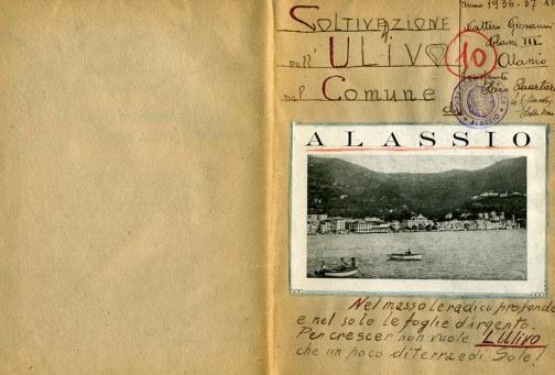 La coltivazione dell'ulivo nel comune di Alassio, di Giovanni Nattero (alunno), Scuola elementare (Alassio, SV, Liguria), 1936-1937 - Ente conservatore: Indire, Firenze